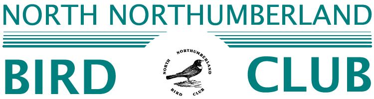 bird club masthead-2013
